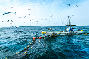 宮城の漁業・海産物 | JFみやぎ ...